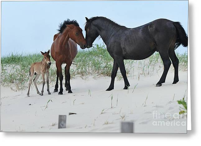 Shadow Horse Studios Greeting Cards - The New Family Greeting Card by Lyndsey Warren