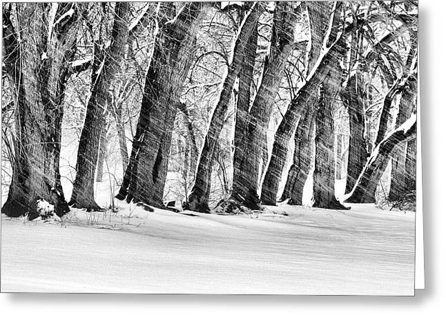 Blizzard New York Greeting Cards - The Noreaster BW Greeting Card by JC Findley