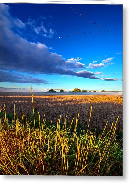 Wild Geese Greeting Cards - The Northern Winds Sing a Lullaby Greeting Card by Phil Koch