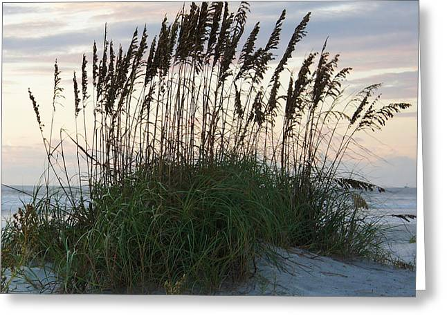 Sea Oats Greeting Cards - The Oates Greeting Card by Brandon Addis