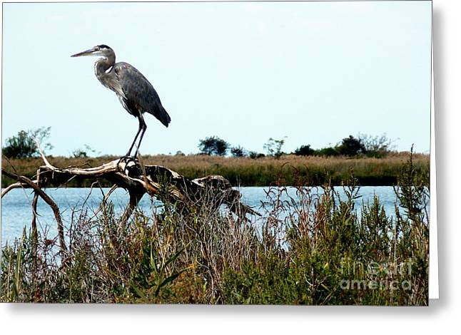 Photos Of Birds Greeting Cards - The Observer Greeting Card by Skip Willits