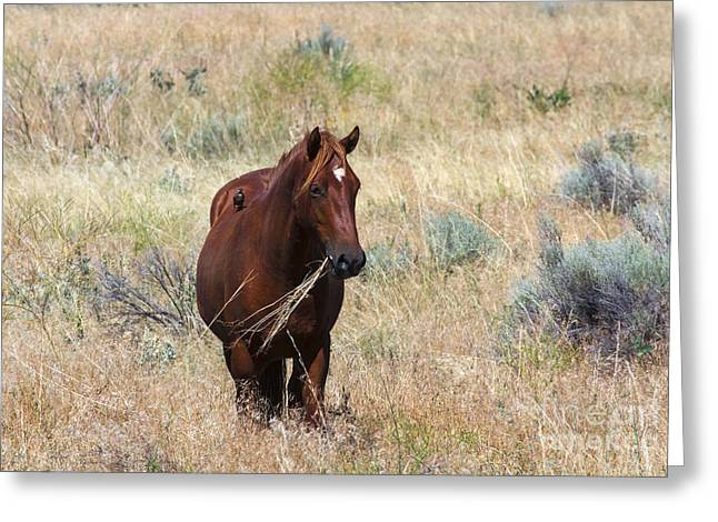 Wild Horse Greeting Cards - The Odd Couple Greeting Card by Mike  Dawson