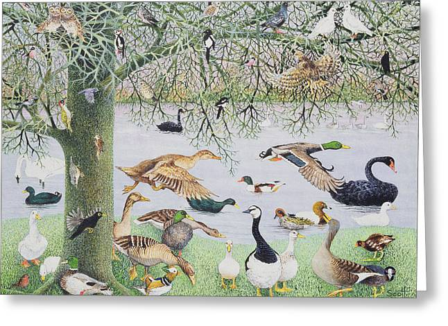 Black Swans Greeting Cards - The Odd Duck Acrylic On Canvas Greeting Card by Pat Scott