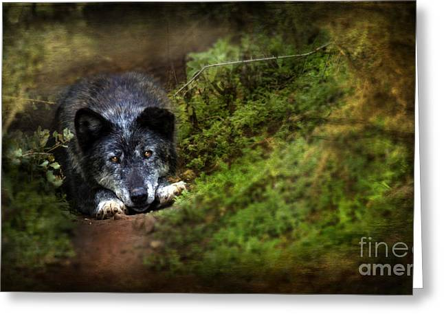 Growling Greeting Cards - The Old And Not Too Bad Wolf Greeting Card by Angel  Tarantella