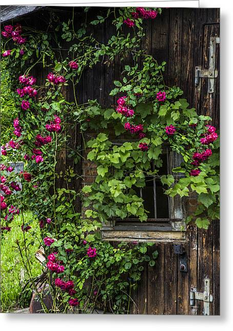 Charming Cottage Greeting Cards - The Old Barn Window Greeting Card by Debra and Dave Vanderlaan