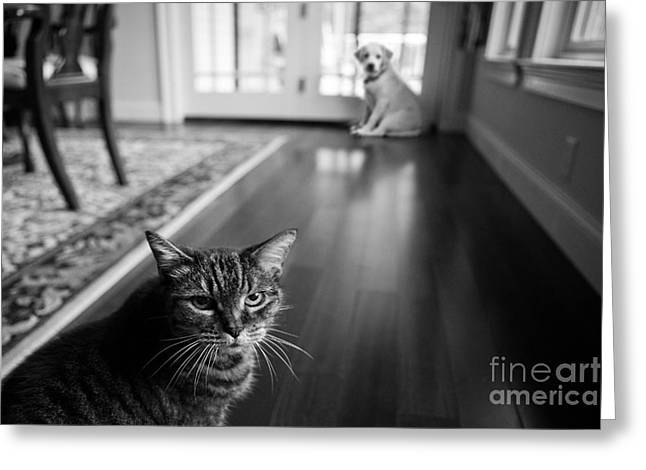 Grainy Greeting Cards - The old cat and the new puppy Greeting Card by Diane Diederich