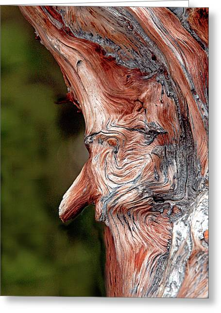 James Steele Greeting Cards - The Old Man In The Tree Greeting Card by James Steele