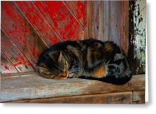 Pictures Of Cats Greeting Cards - The Old Mill Cat Greeting Card by Julie Dant