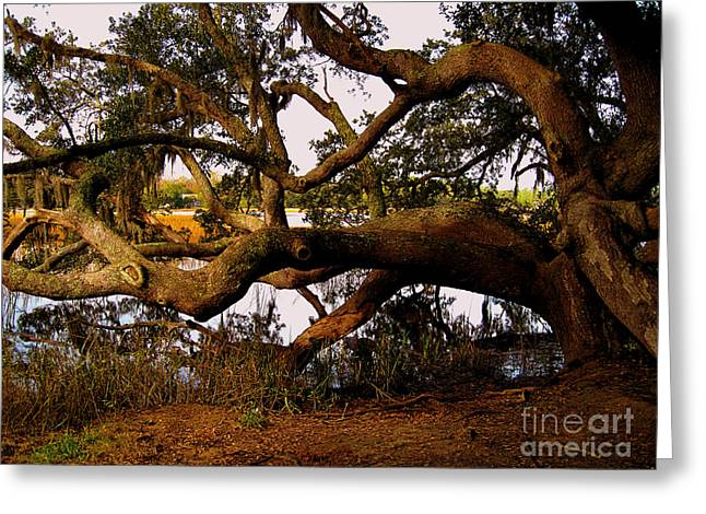 Marsh Scene Greeting Cards - The Old Tree at the Ashley River in Charleston Greeting Card by Susanne Van Hulst