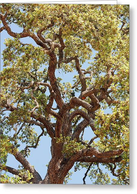 Gnarly Greeting Cards - The Old Tree Greeting Card by Connie Fox