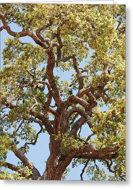 The Old Tree Greeting Card by Connie Fox