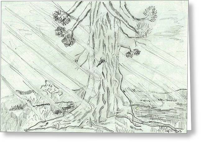 Hike Drawings Greeting Cards - The old tree in spring light  - sketch Greeting Card by Felicia Tica