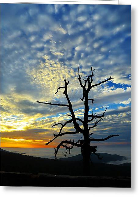 Valley Greeting Cards - The Old Tree Greeting Card by Metro DC Photography