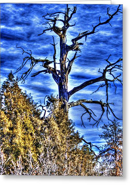 Gnarly Greeting Cards - The Old Tree Greeting Card by Steven Parker