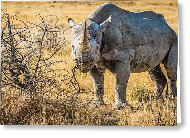 Horns Greeting Cards - The Old Warrior - Rhinoceros Photograph by Duane Miller Greeting Card by Duane Miller