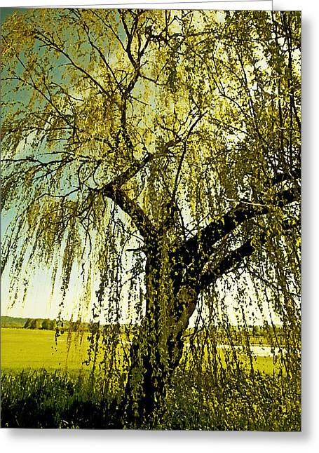 Weeping Digital Art Greeting Cards - The Old Willow Greeting Card by Bonnie Bruno