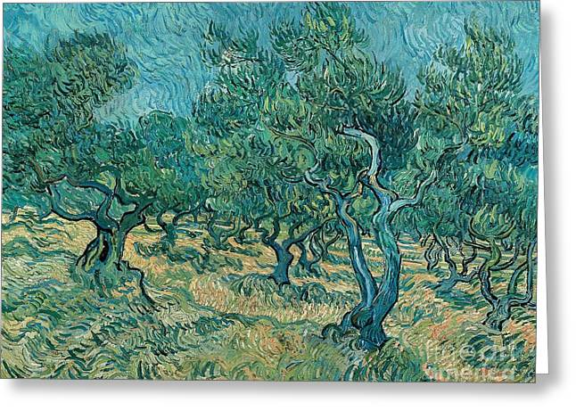 Nederland Paintings Greeting Cards - The olive grove Greeting Card by Vincent van Gogh