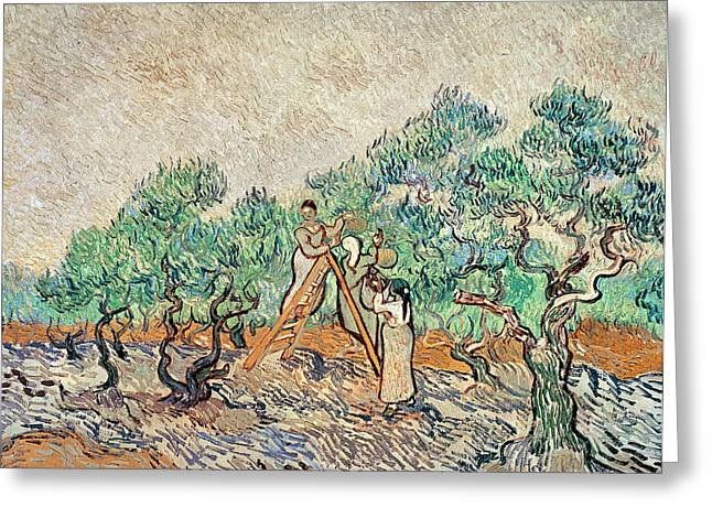 Picking Greeting Cards - The Olive Orchard, 1889 Oil On Canvas Greeting Card by Vincent van Gogh