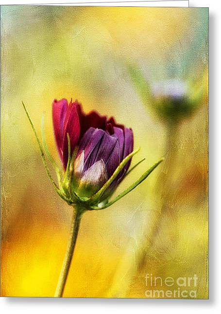 Dancing Petals Greeting Cards - The Opening Greeting Card by Darren Fisher