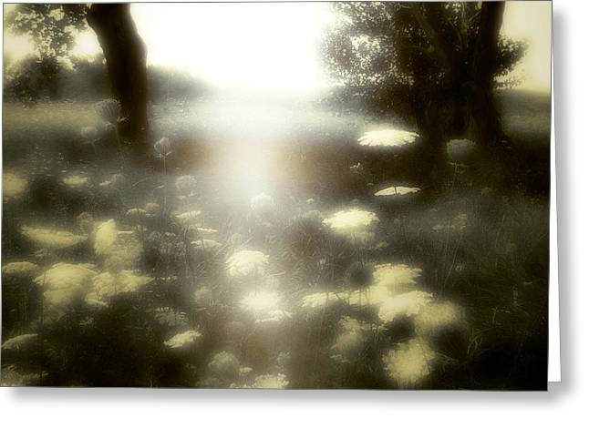 Soft Light Digital Art Greeting Cards - The Opening Greeting Card by Gothicolors Donna Snyder