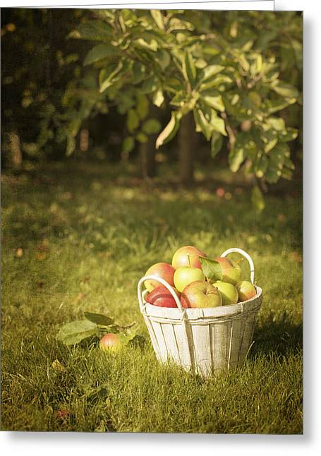 Apple Greeting Cards - The Orchard Greeting Card by Amanda And Christopher Elwell