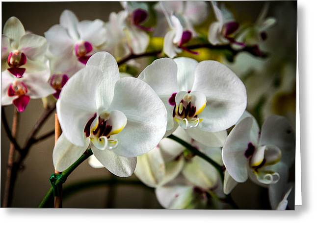 Blue Ridge Mountains Greeting Cards - The Orchid Sisters and Backup Singers Greeting Card by John Haldane