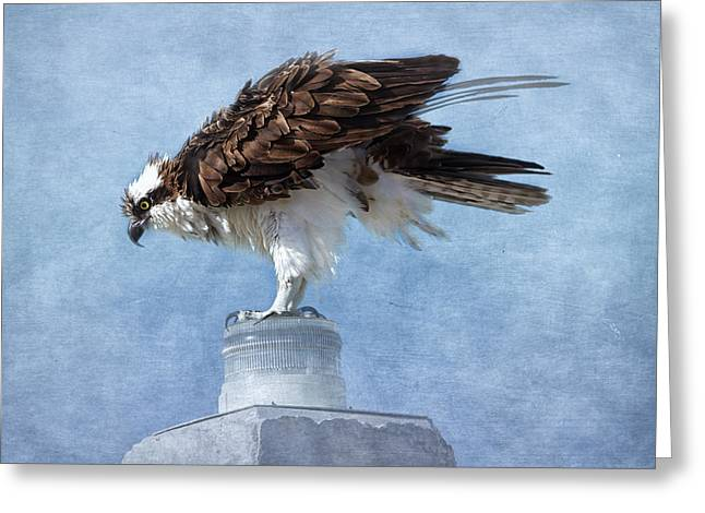 The Osprey  Greeting Card by Kim Hojnacki