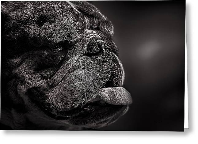 Dog Photographs Greeting Cards - The other dog next door Greeting Card by Bob Orsillo