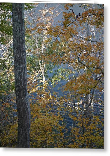 Lake Tapestries - Textiles Greeting Cards - The Outstanding Birch II Greeting Card by Thia Stover