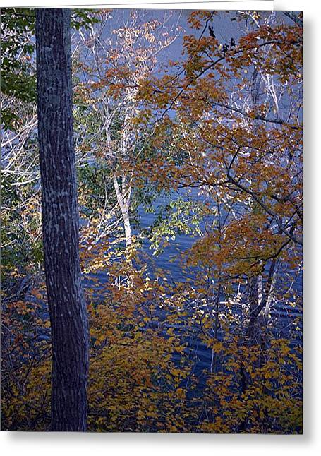 Lake Tapestries - Textiles Greeting Cards - The Outstanding Birch  Greeting Card by Thia Stover