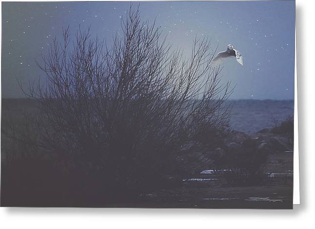 Snowy Night Greeting Cards - The Owl Greeting Card by Carrie Ann Grippo-Pike