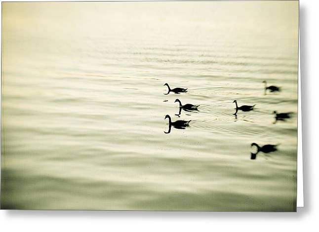 The Pace Of Nature Greeting Card by Carolyn Cochrane