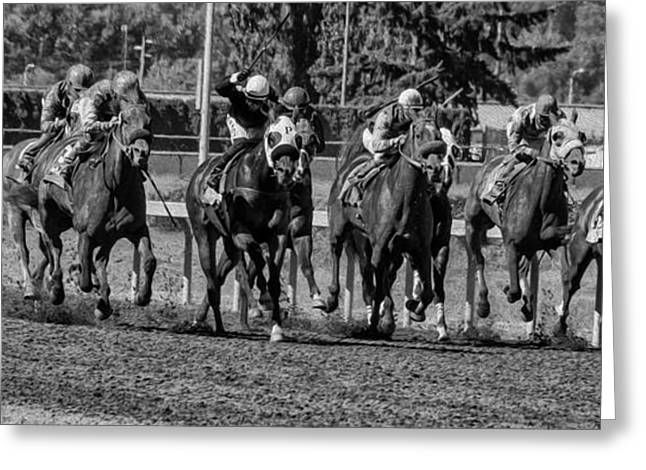 Race Horse Greeting Cards - The Pack Greeting Card by Nichon Thorstrom