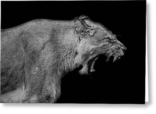 Lioness Greeting Cards - The pain within Greeting Card by Paul Neville