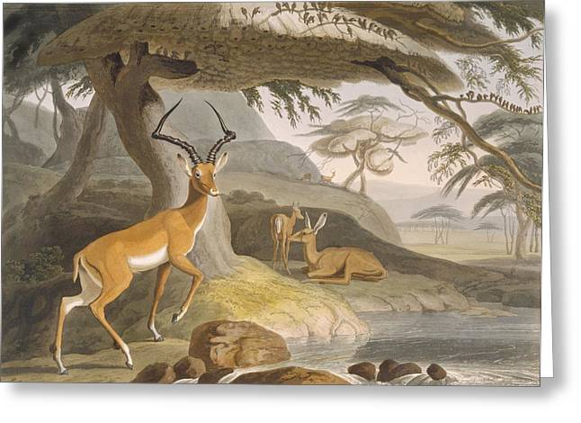 Scenic Drawings Greeting Cards - The Pallah, 1804-05 Greeting Card by Samuel Daniell