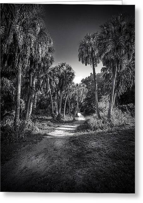 Black And White Photos Greeting Cards - The Palm Trail b/w Greeting Card by Marvin Spates