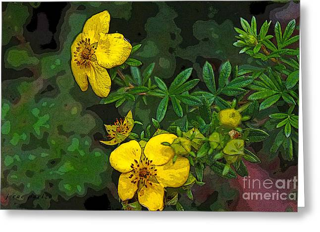 Nyctaginaceae Greeting Cards - The Paperbush Flower Greeting Card by Janice Rae Pariza