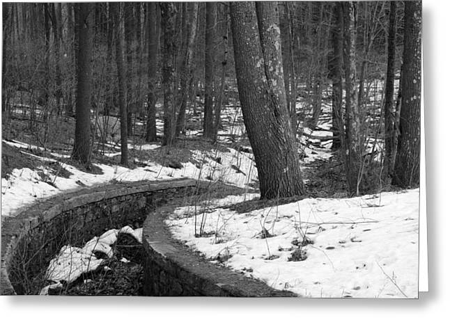 Pine Needles Greeting Cards - The Parallel Path Greeting Card by Luke Moore