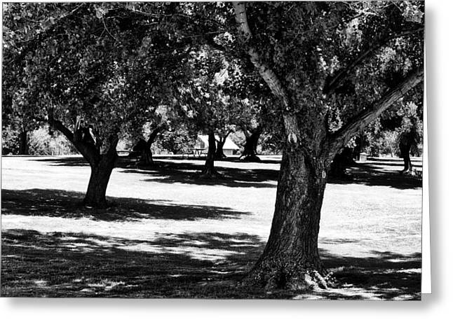 Tree Limbs Greeting Cards - The Park Greeting Card by Camille Lopez