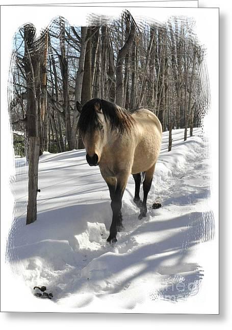 The Paso Fino Stallion Named Brio Greeting Card by Patricia Keller