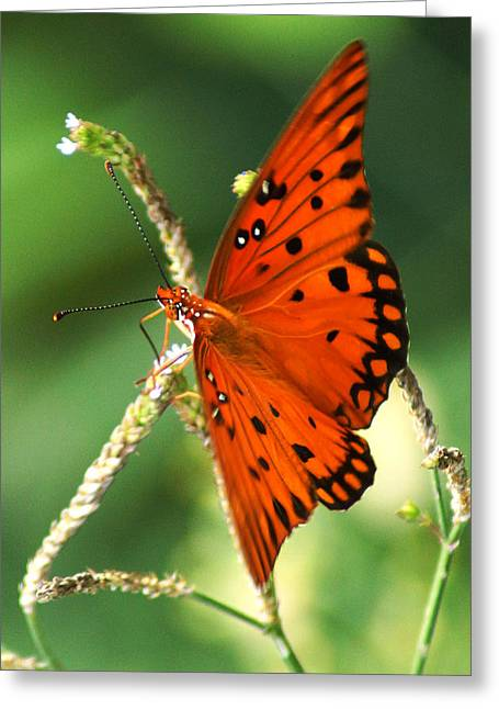 The Passion Butterfly Greeting Card by Kim Pate