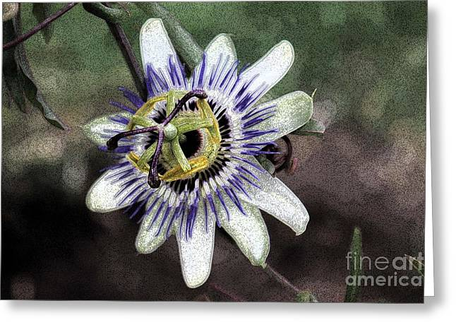 Passiflora Greeting Cards - The Passion Flower in Abstract Greeting Card by Janice Rae Pariza