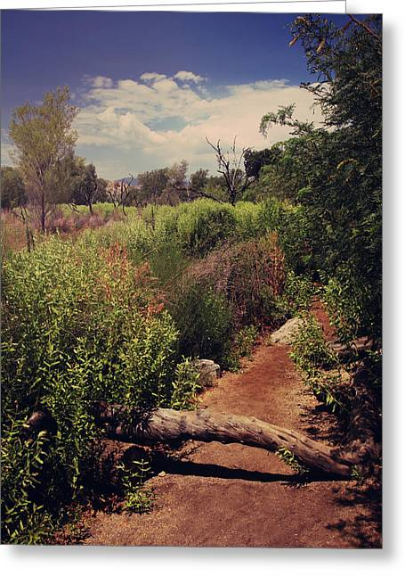 Nature Preserve Greeting Cards - The Past is Gone Greeting Card by Laurie Search