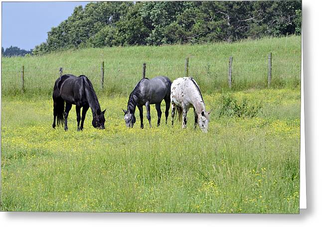 Susan Leggett Greeting Cards - The Pasture Greeting Card by Susan Leggett