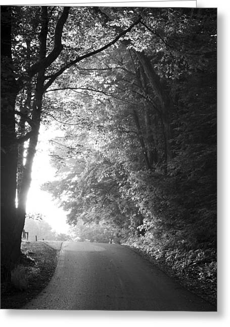 Fine Art White Nature Trees Greeting Cards - The Path Ahead Greeting Card by Andrew Soundarajan