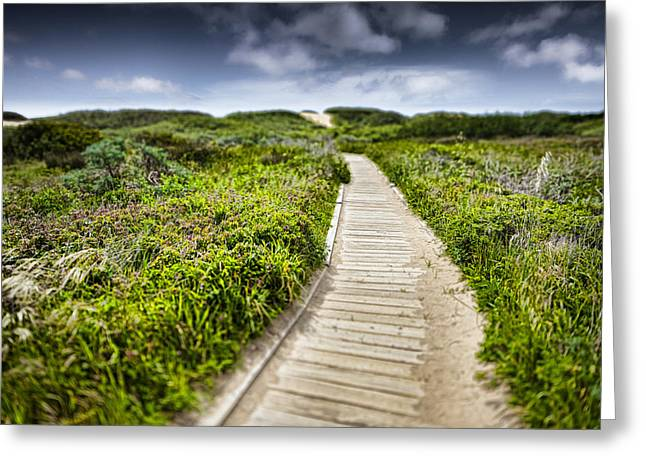 Ano Nuevo Photographs Greeting Cards - The Path Greeting Card by John Early