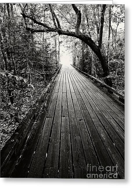 Louisiana Sunrise Greeting Cards - The Path Greeting Card by Scott Pellegrin