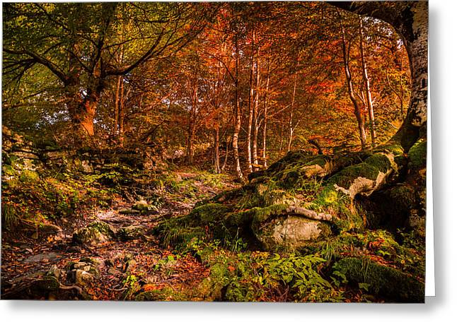 Orangem Tree Greeting Cards - The path Greeting Card by Stefano Termanini