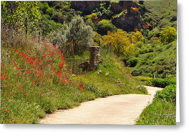 Path Through The Poppies Greeting Cards - The Path Through the Valley Greeting Card by Mary Machare