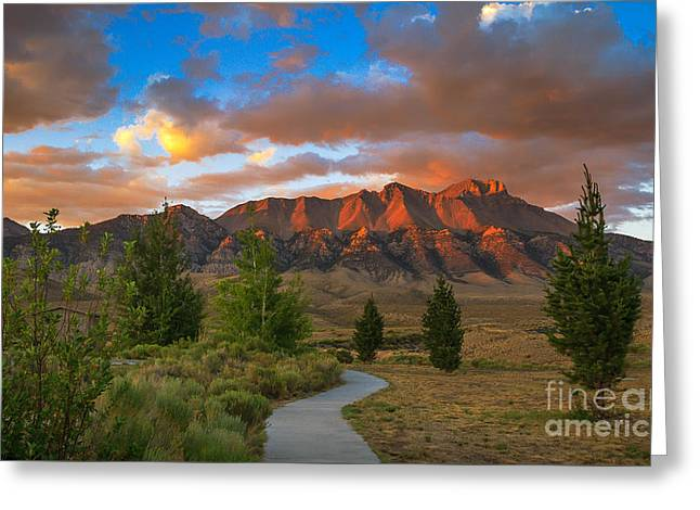 The Path To Beauty Greeting Card by Robert Bales